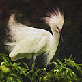 Egret 12 by Ingrid Smith-Johnsen