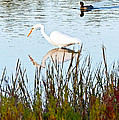 Egret And Coot In Autumn by Kate Brown