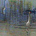 Egret And Heron Watching by Tom Janca