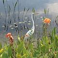 Egret And Iris by Barbara Von Pagel