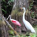 Egret And Spoonbill by Theresa Willingham