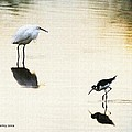 Egret And Stilt At The Grp by Tom Janca