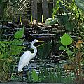 Egret At A Pond by Ronald Olivier