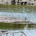 Egret At Low Tide by Terry Cobb