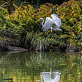 Egret At The Lake by Chris Lord