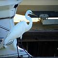 Egret At The Lake by Ella Kaye Dickey