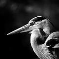 Egret by Don Cockroft