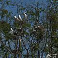 Egret Estuary   #6878 by J L Woody Wooden