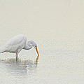 Egret Finds Himself by Karol Livote