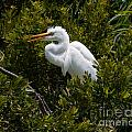 Egret In Bushes by Dale Powell
