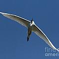 Egret In Flight   #6749 by J L Woody Wooden