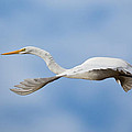 Egret In Flight by Jack Nevitt