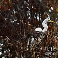 Egret In Hiding by Scott Hervieux