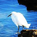 An Egret In St. Augustine by Marcus Dagan