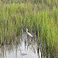 Egret In The Marsh by Ellen Meakin