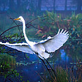 Egret In The Mist by Mark Andrew Thomas