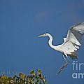 Egret Landing by Heather Coen