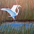 Egret Landing by Keith Wilkie