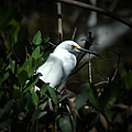 Egret Of Sanibel 5 by David Weeks