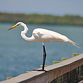 Egret On A Pier by Bill Cannon