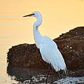 Egret On Dunedin Causeway by Bill Cannon