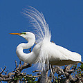 Egret by Raymond Poynor