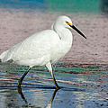Egret Reflections- 2  by Bruce Frye