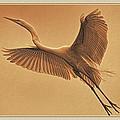 Egret Sepia by Deborah Benoit