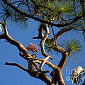 Egret Spoonbill And Stork by Mary and Curt Johnston