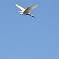 Egret Takes Flight by Kathy Vilim