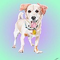 Ehu - A Former Shelter Sweetie by Dave Anderson