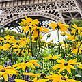 Eiffel Flower by Nigel R Bell