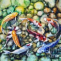 Eight Koi Fish Playing With Bubbles by Zaira Dzhaubaeva
