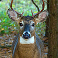 Eight Point Face To Face by Michael Peychich