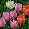 Eight Tulips And One Bee by Muriel Levison Goodwin
