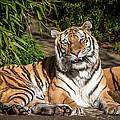 El Tigre by Craig Pifer