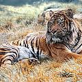El Tigre by Joachim G Pinkawa