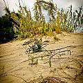 Elafonisi Grass by Oleg Koryagin