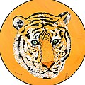 Elainas Tiger by Jim Harris