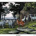 Eland Pallah Koodoo by Splendid Art Prints