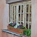 Elayne Look Through The Window by Mary Rogers