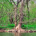Elder Tree by Art Dingo