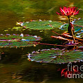 Electric Lily Pad by Beth Sargent