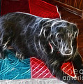 Electrostatic Dog And Blanket by Barbara Griffin