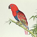 Electus Parrot On A Bamboo Shoot by Chinese School