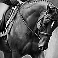 Elegance - Dressage Horse by Michelle Wrighton