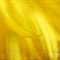 Elegance In Yellow by Darren Fisher