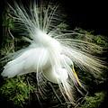Elegance Of Creation by Karen Wiles