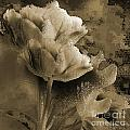 Elegance by Yanni Theodorou