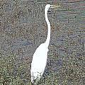 Elegant Egret  by Annette Allman